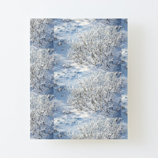 Hoarfrost on Arctic Willow Canvas Mounted Print