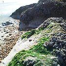 Seaweed by HeatWave