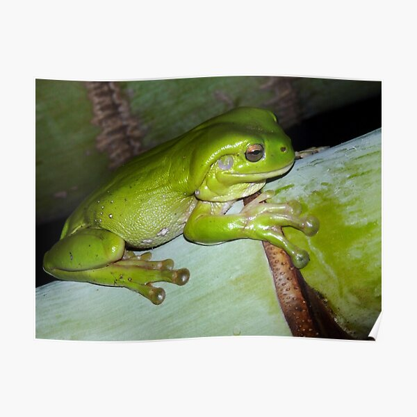 Frog Cushion #1  Poster