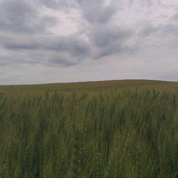 Wheat Field No. 3 by TMcVey