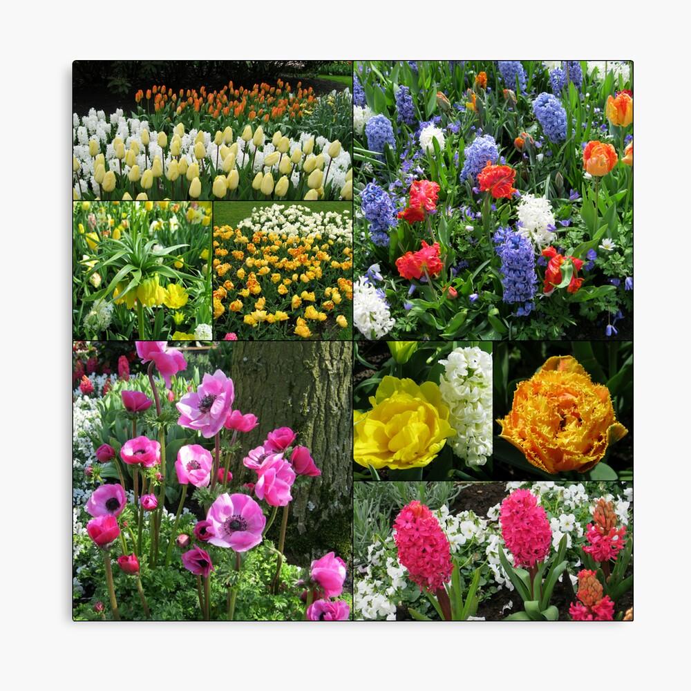 Keukenhof Collage featuring Anemones and Hyacinths Leinwanddruck
