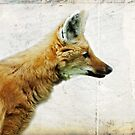 Red Maned Wolf by Bine