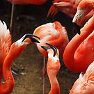 Flamingo Discussion Group by Bine