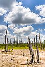 Ghost Forest - Mexican Gulf Coast in the Yucatan by Mark Tisdale