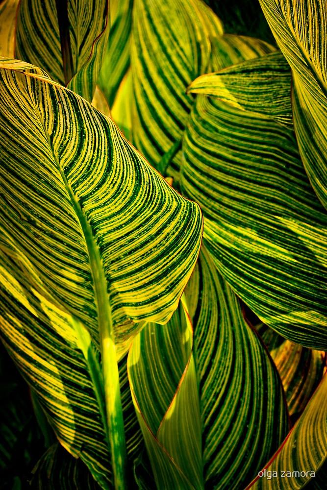 Stripes by olga zamora