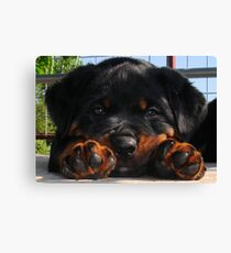Cute Rottweiler Puppy Resting Head Between Paws Canvas Print