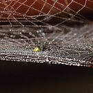 The cobweb with droplets # 1 by debjyotinayak