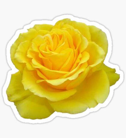 Beautiful Yellow Rose Flower on Black Background Sticker