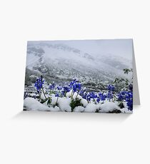 Snow Lupin Greeting Card
