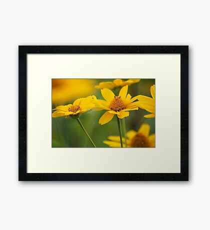 Color Of The Sun Framed Print