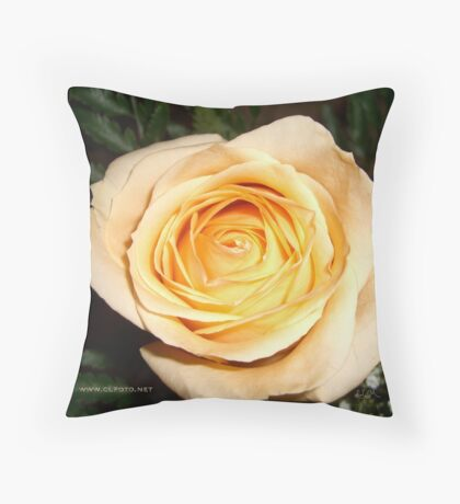 Only a Rose, Vancouver, BC Throw Pillow