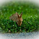 Smelling the Clover by Richard Lee