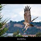 Bird of prey. by Darren  Rooney