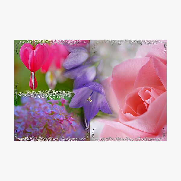 Gladness Abounding ~ Summer Flowering Photographic Print