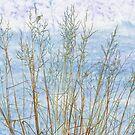 Winter's Grass by Jack Grace