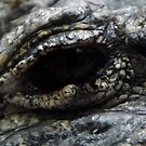 Chinese alligator eye by agenttomcat