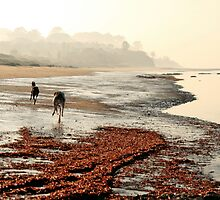 Foggy Morning by GreyhoundSN