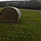 Buttercup Haybale by LightPhonics