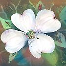 Dogwood Blossom by arline wagner