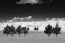 Cloud and Tree Study I by Nate Welk
