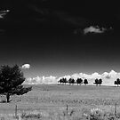 Cloud and Tree Study II by Nate Welk