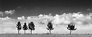 Cloud and Tree Study III by Nate Welk
