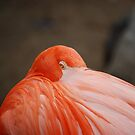 Flamingo by plopezjr