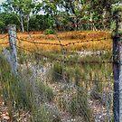Dingo Proof Fence.  by Eve Parry