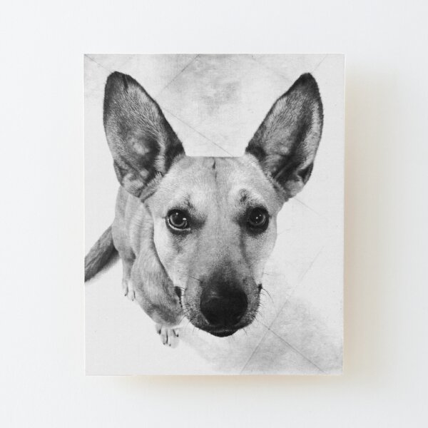 Carolina Dog Gray Pup - American Dingo Wood Mounted Print