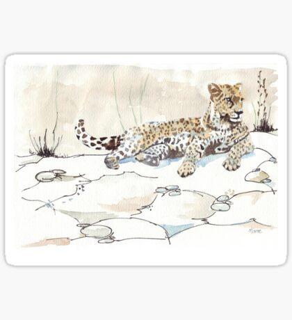 African Leopard {Panthera pardus} 'Luiperd' Sticker