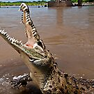 What a croc! by Wanda Staples