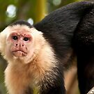 White Faced Monkey by Wanda Staples