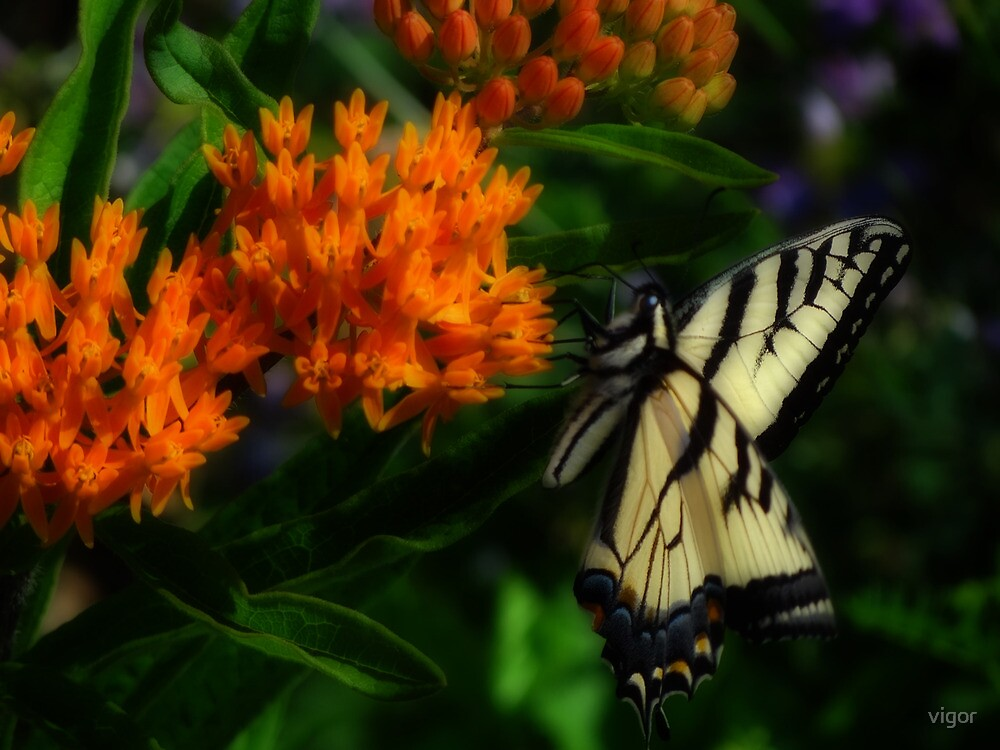 On the wings of summer by vigor