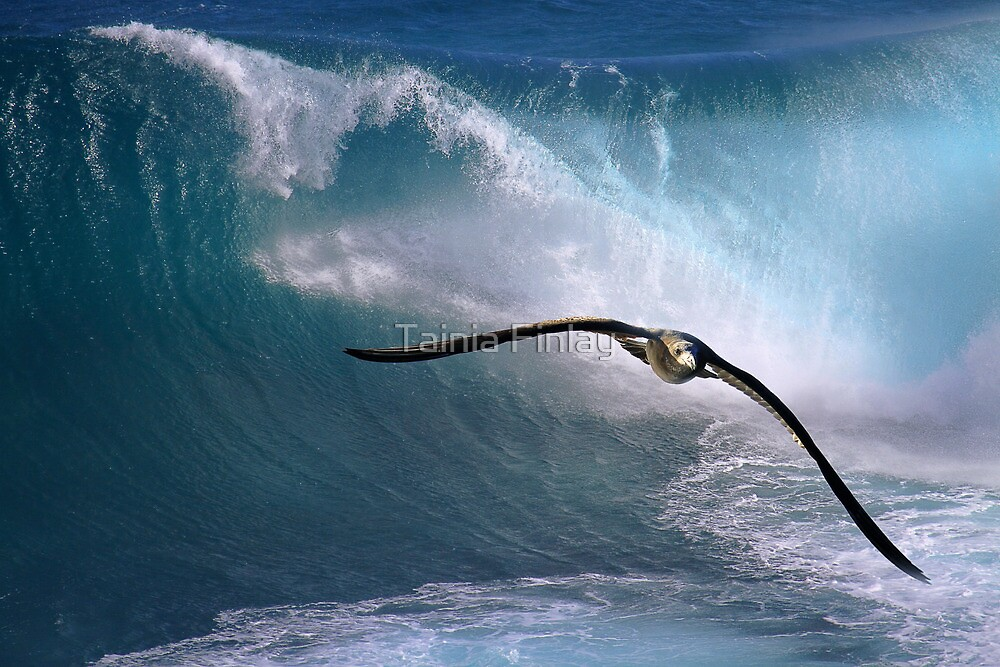 Freedom To Soar by Tainia Finlay
