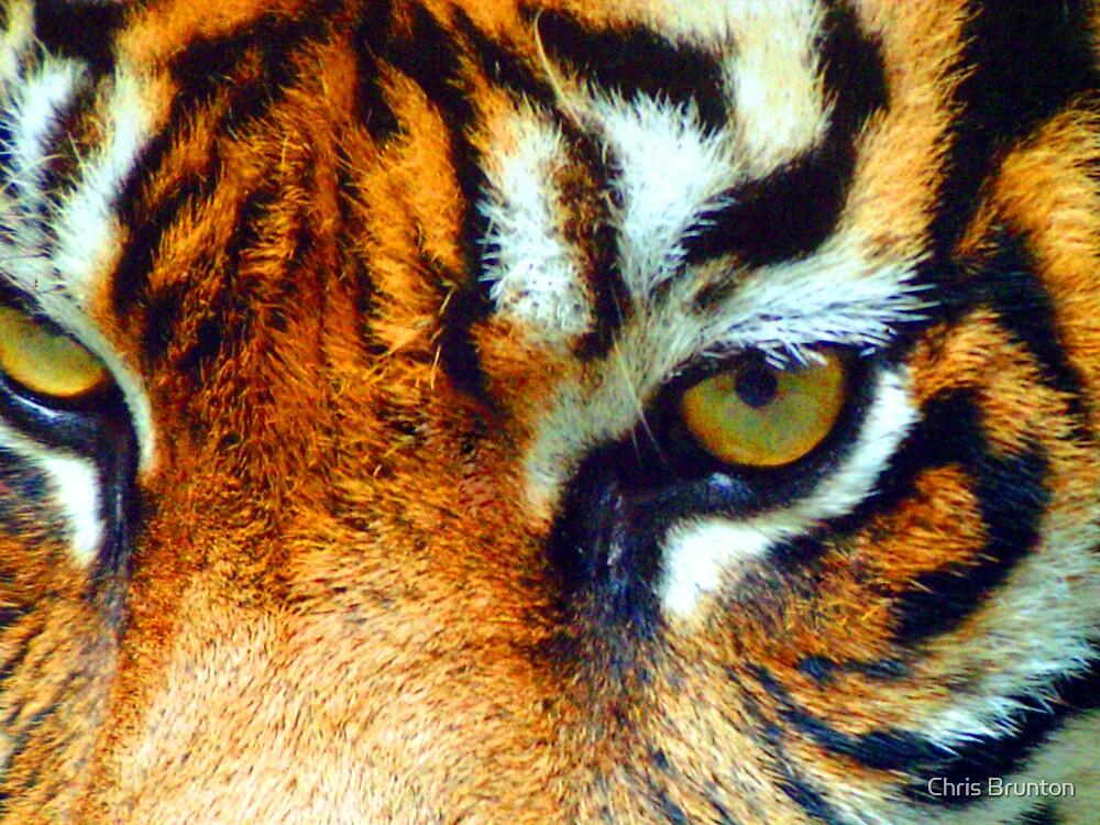 Tiger eyes by Chris Brunton