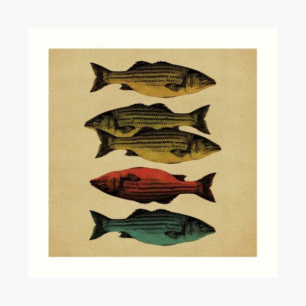 One fish, two fish . . . Art Print