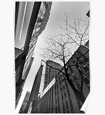 Twigs at Rockefeller - Manhattan, New York, USA Poster