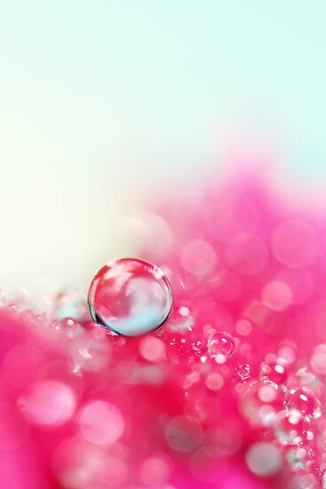 A Drop with Raspberrys and Cream by Sharon Johnstone