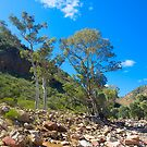 Dry Riverbed, Brachina Gorge, Flinders Ranges, South Australia. by johnrf