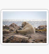 Yoga Bear Sticker