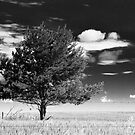 Cloud and Tree Study IV by Nate Welk