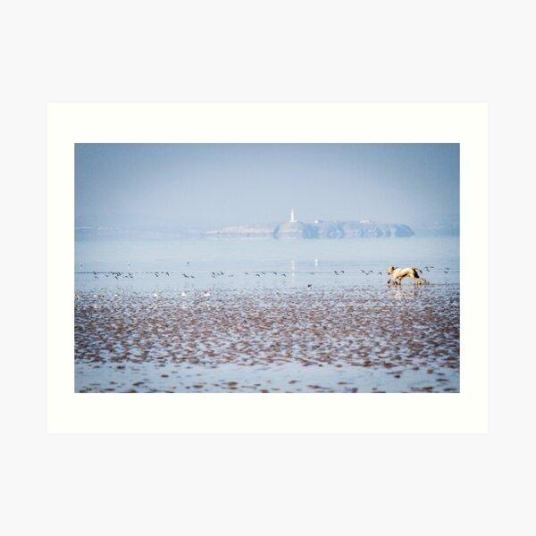 Sea bird chasing Spinone Art Print