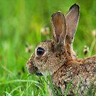 Rabbit Head by kernuak