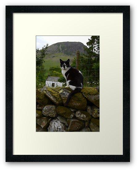 lake district cat by joak