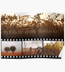 Autumn In Frankland River Poster
