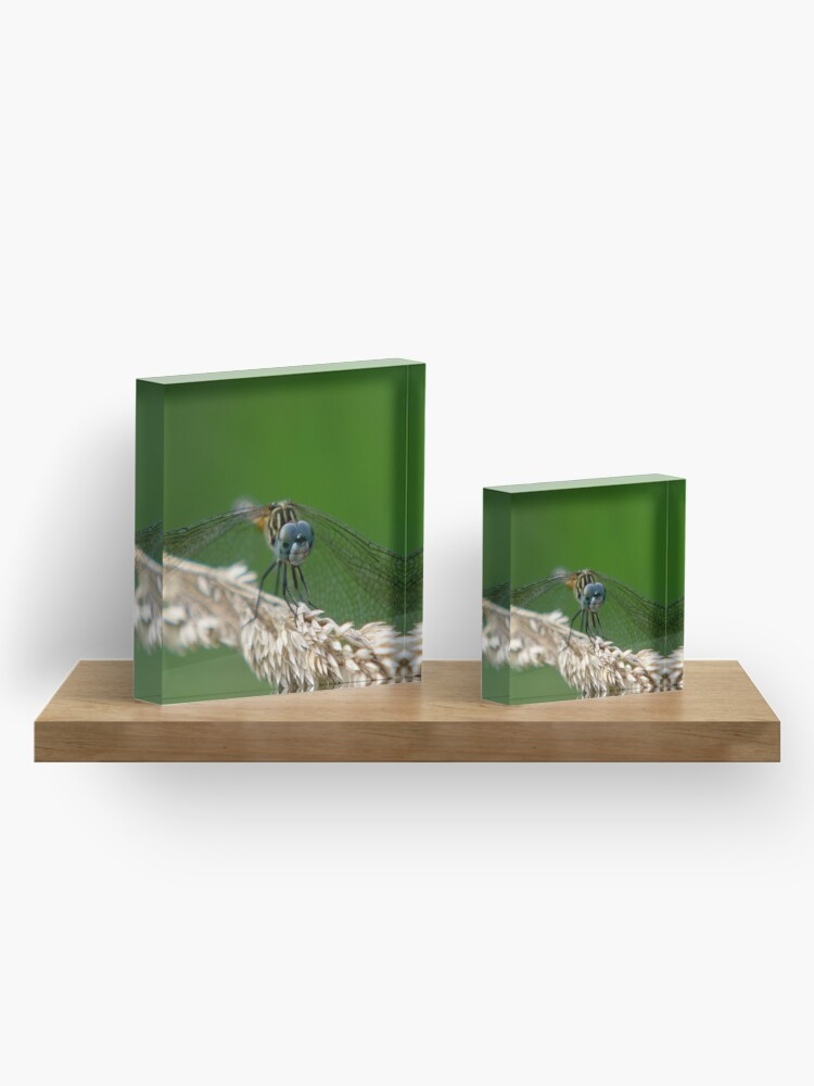 Alternate view of Blue Dasher Dragonfly Acrylic Block