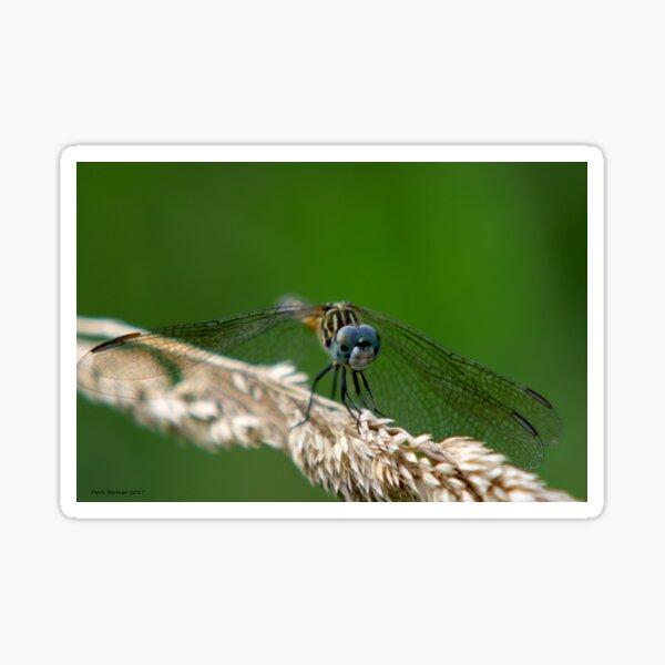 Blue Dasher Dragonfly Sticker