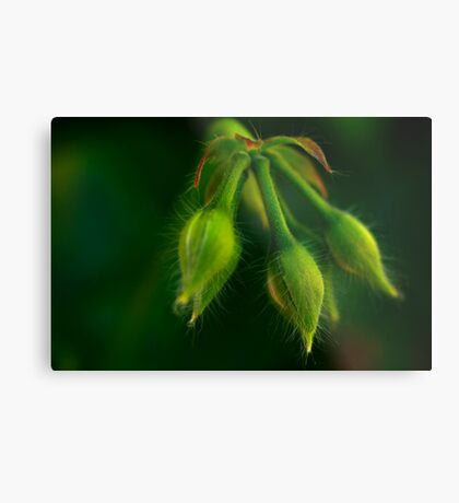 with hairs on her chinny chin chin Metal Print