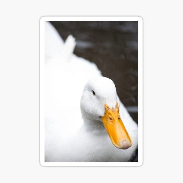 white Duckface Sticker
