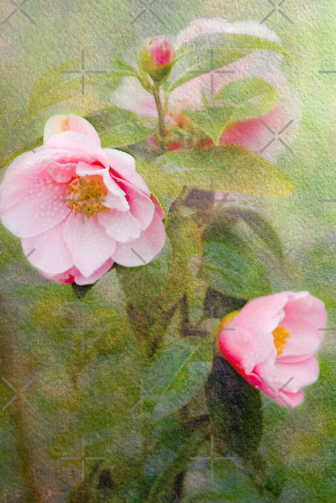 Roses of the Storm by Catherine Hamilton-Veal  ©